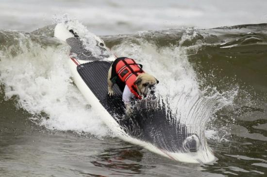 surf-city-surf-dog-7-640x426.jpg